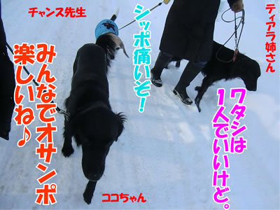 チャンスとティアラ+ココ-20111225-6.jpg