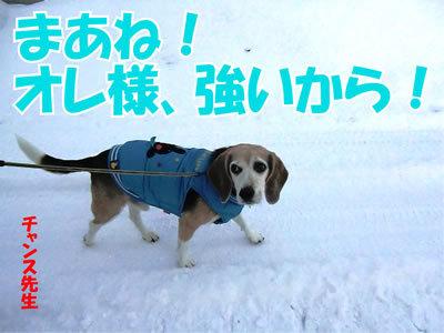 チャンスとティアラ+ココ-20111225-7.jpg