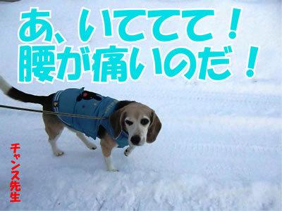 チャンスとティアラ+ココ-20111225-8.jpg