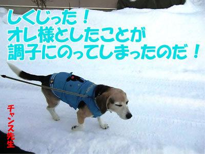 チャンスとティアラ+ココ-20111225-9.jpg