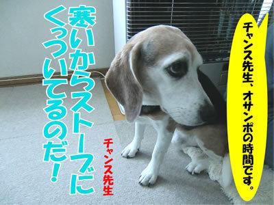 チャンスとティアラ+ココ-20111226-1.jpg