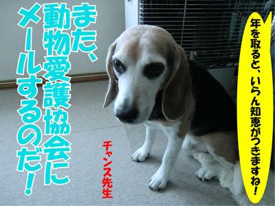 チャンスとティアラ+ココ-20111226-2.jpg
