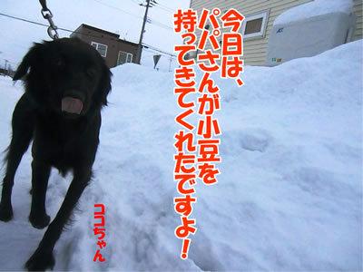 チャンスとティアラ+ココ-20111226-5.jpg