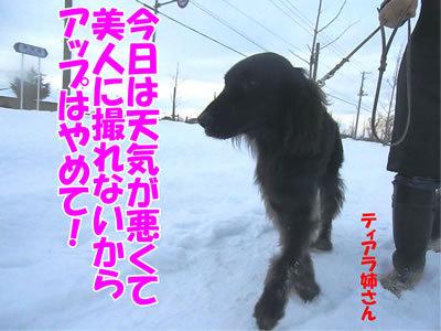 チャンスとティアラ+ココ-20111226-7.jpg