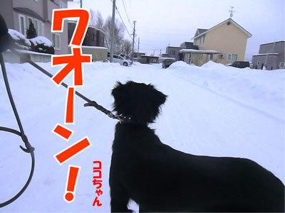 チャンスとティアラ+ココ-20111226-8.jpg