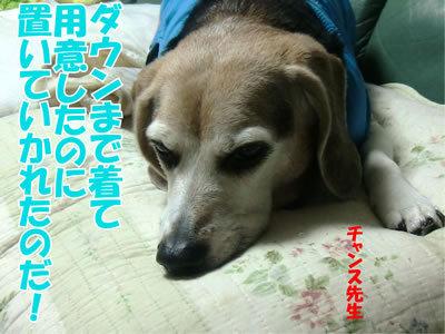 チャンスとティアラ+ココ-20111226-9.jpg