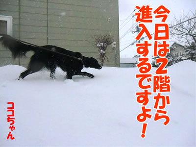 チャンスとティアラ+ココ-20111227-2.jpg