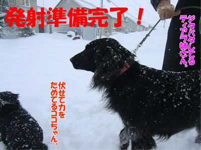 チャンスとティアラ+ココ-20111227-3.jpg