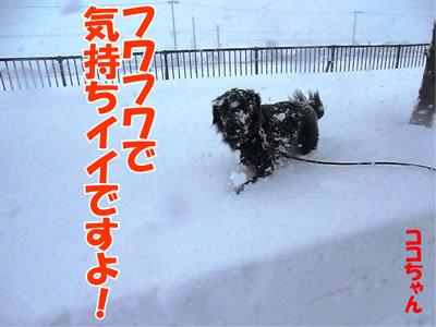 チャンスとティアラ+ココ-20111227-5.jpg