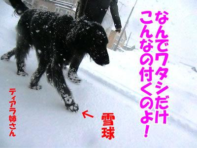 チャンスとティアラ+ココ-20111227-6.jpg