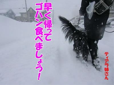 チャンスとティアラ+ココ-20111227-8.jpg
