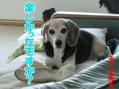 チャンスとティアラ+ココ-20111227-9.jpg