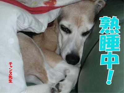 チャンスとティアラ+ココ-20111228-1.jpg