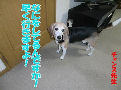 チャンスとティアラ+ココ-20111228-2.jpg