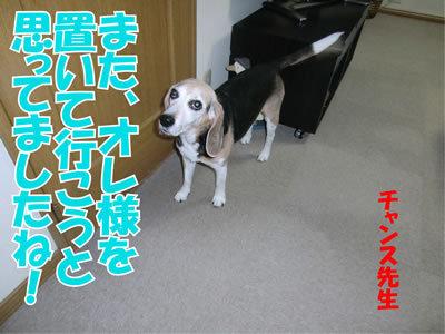 チャンスとティアラ+ココ-20111228-3.jpg