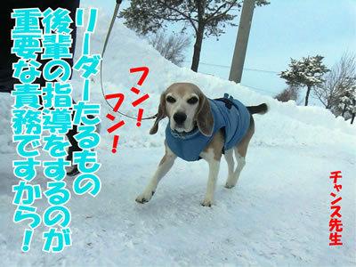 チャンスとティアラ+ココ-20111228-4.jpg