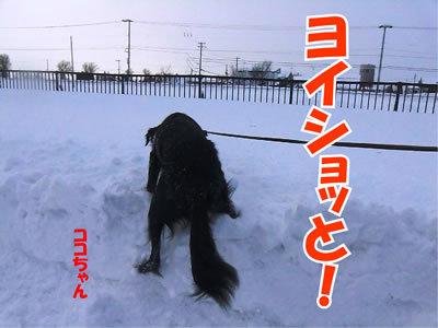チャンスとティアラ+ココ-20111228-5.jpg