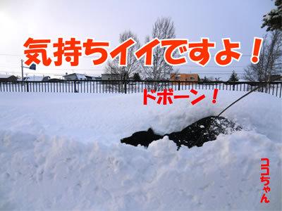 チャンスとティアラ+ココ-20111228-6.jpg