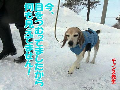 チャンスとティアラ+ココ-20111228-7.jpg