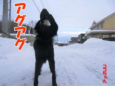 チャンスとティアラ+ココ-20111228-8.jpg