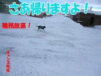 チャンスとティアラ+ココ-20111228-10.jpg