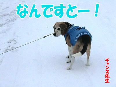 チャンスとティアラ+ココ-20111228-11.jpg
