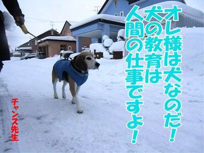 チャンスとティアラ+ココ-20111228-13.jpg