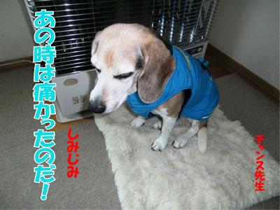 チャンスとティアラ+ココ-20111229-4.jpg