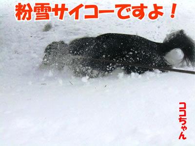 チャンスとティアラ+ココ-20111229-5.jpg