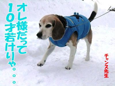 チャンスとティアラ+ココ-20111229-6.jpg