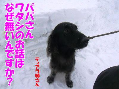 チャンスとティアラ+ココ-20111229-7.jpg