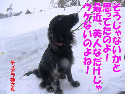 チャンスとティアラ+ココ-20111229-8.jpg