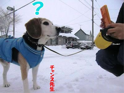 チャンスとティアラ+ココ-20111229-10.jpg