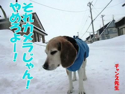 チャンスとティアラ+ココ-20111229-11.jpg