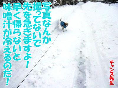 チャンスとティアラ+ココ-20111229-12.jpg