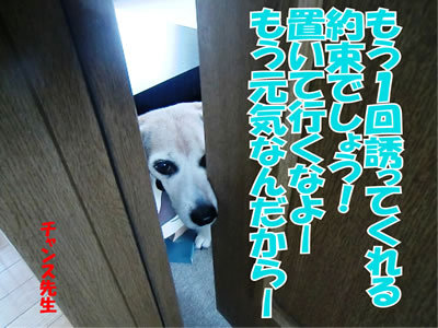 チャンスとティアラ+ココ-20111230-1.jpg