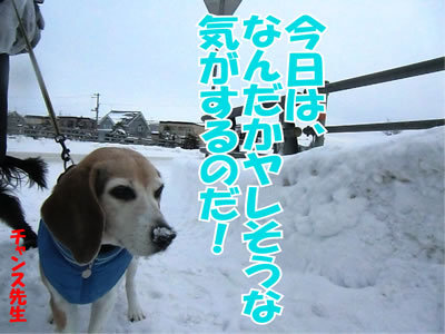 チャンスとティアラ+ココ-20111230-3.jpg