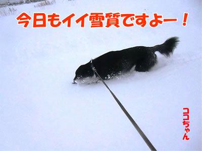 チャンスとティアラ+ココ-20111230-4.jpg