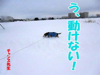 チャンスとティアラ+ココ-20111230-5.jpg
