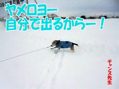 チャンスとティアラ+ココ-20111230-6.jpg