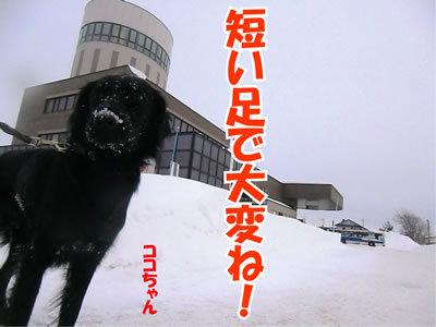 チャンスとティアラ+ココ-20111230-7.jpg