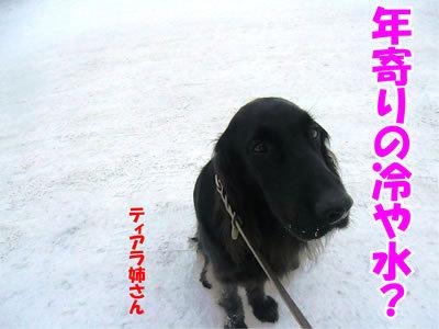 チャンスとティアラ+ココ-20111230-8.jpg