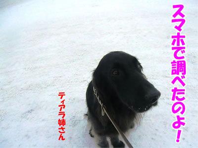 チャンスとティアラ+ココ-20111230-9.jpg