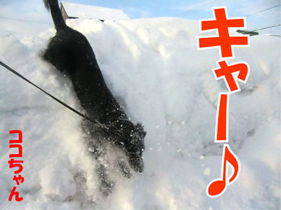 チャンスとティアラ+ココ-20111231-2.jpg