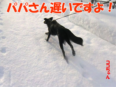チャンスとティアラ+ココ-20111231-3.jpg