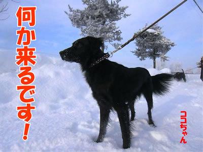チャンスとティアラ+ココ-20111231-4.jpg