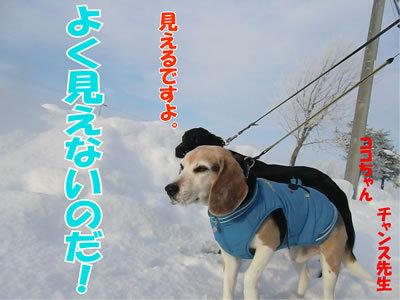 チャンスとティアラ+ココ-20111231-5.jpg