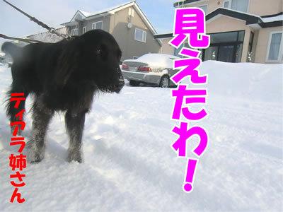チャンスとティアラ+ココ-20111231-6.jpg