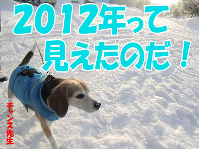 チャンスとティアラ+ココ-20111231-7.jpg