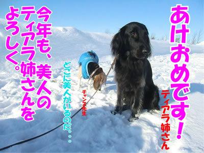 チャンスとティアラ+ココ-20120101-2.jpg